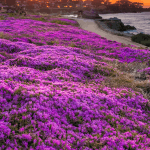 Pacific Grove Chamber of Commerce Tourist Guide